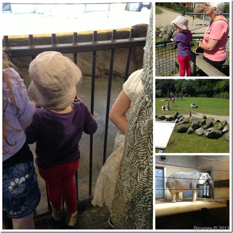 Ålborg zoo